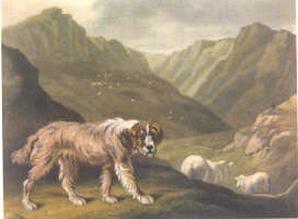 The shepherd`s dog by Reinagle